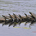 Map Turtles by Tony Beck