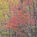 Maple Corner Foliage by Alan L Graham