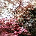 Maple Dreams by Yen