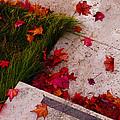 Maple Leaf Fall 3 - The Getty by Robert J Sadler