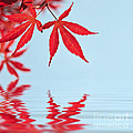 Maple Reflection by Delphimages Photo Creations