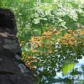 Maple Reflections by Sharon Elliott