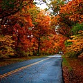 Maple Road by Valerie Fuqua