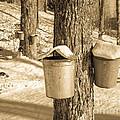 Maple Sap Buckets by Edward Fielding