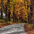 Maple Tree Road by Jeff Folger
