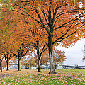 Maple Trees In Portland Downtown Park In Fall by David Gn