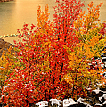 Maples Along The Palisades by Greg Norrell