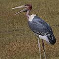 Marabou Stork   #0176 by J L Woody Wooden