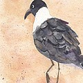 March Of The Laughing Gull by Bev Veals