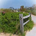 Marconi Beach Path by Michael DArienzo