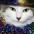 Mardi Gras Kitty by Rhonda Burger