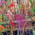 Mardi Gras Tree by William Tegtmeyer
