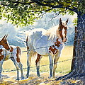 Mare And Colt by Carolyn Watson