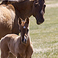 Mare And Foal   #0659 by J L Woody Wooden