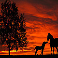Mare And Foal Sunset Silhouette Series by David Dehner