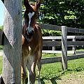Mare Foal94 by Janice Byer