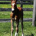 Mare Foal96 by Janice Byer