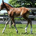 Mare Foal97 by Janice Byer