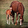 Mare With Foal by Janice Pariza