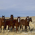 Mares   #0844 by J L Woody Wooden