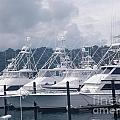 Marina Costa Rica by DejaVu Designs