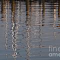 Marina Reflection 3 by Roy Thoman