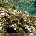 Marine Algae by Science Photo Library