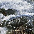 Marine Iguana Pair In Surf Galapagos by Tui De Roy