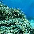Marine Plants by Science Photo Library