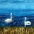 Marion Lake Swans by Mary Benke