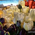Market Flowers by Lauren Leigh Hunter Fine Art Photography