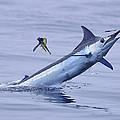 Marlin Magic by Bryan Toney
