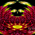 Maroon And Yellow Chrysanthemums Polar Coordinates Effect by Rose Santuci-Sofranko