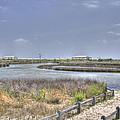 Marsh by David Troxel