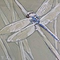 Marsh Dragonfly by Mary Hubley
