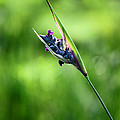 Marsh Flower by Carolyn Stagger Cokley