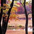 Marsh In Fall by Jim Block