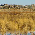 Marsh Lands In Wildlife Refuge by John Shaw