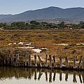 Marsh by Paul Indigo
