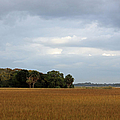 Marsh View by Suzanne Gaff