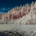 Marshall Pond In Infrared by Greg Nyquist