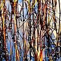 Marshgrass by Karen Wiles