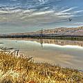 Marshlands 2 by SC Heffner