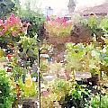 Martha's Garden by Shannon Grissom