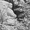 Martin Luther King Memorial Through The Blossoms by Mike McGlothlen