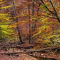 Maryland Country Roads - Autumn Colorfest No. 8 - Catoctin Mountains Frederick County Md by Michael Mazaika