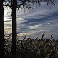 Maryland Wetland 2 by Chris Winpigler