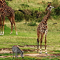 Masai Mara Wildlife Scene by Aidan Moran