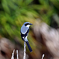Masked Bird by Davids Digits
