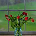 Mason Jar With Tulips by Kay Pickens